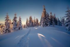 Beaux arbres d'hiver photographie stock