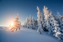 Beaux arbres d'hiver photos libres de droits