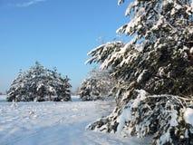 Beaux arbres d'hiver dans la forêt, Lithuanie Photographie stock libre de droits