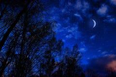 Beaux arbres de bouleau contre le ciel bleu avec les nuages et la lune Photographie stock libre de droits