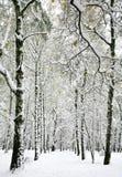 Beaux arbres de bouleau d'hiver avec les feuilles d'automne jaunes Photos stock