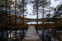 Beaux arbres de feuilles d'automne avec le regard de beaux-arts cru mou coloré Forest Park Fond de paysage d'automne a photographie stock libre de droits