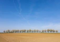 Beaux arbres de floraison dans l'allée avec le champ Images libres de droits