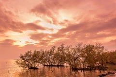 Beaux arbres de palétuvier sur la mer tropicale de baie thaïlandaise photographie stock