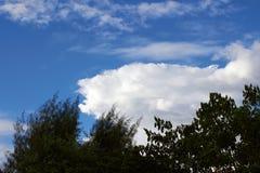Beaux arbres et nuages Photos libres de droits
