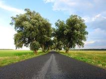 Beaux arbres et route après pluie, Lithuanie Images stock