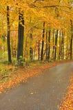Beaux arbres et route d'automne Images stock