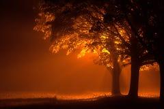 Beaux arbres la nuit avec la lumière orange Image stock