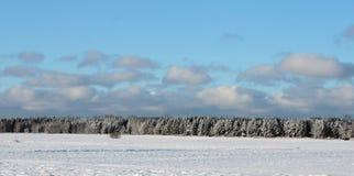 Beaux arbres neigeux d'hiver, Lithuanie Image libre de droits