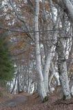 Beaux arbres nus le feuillage est au sol ils cachés la manière Images stock