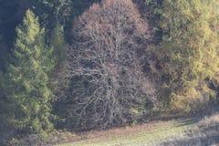 Beaux arbres nus le feuillage est au sol ils cachés la manière Photo stock