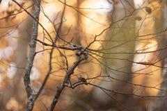 Beaux arbres nus le feuillage est au sol ils cachés la manière Photographie stock