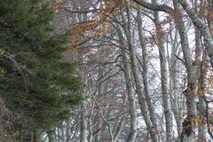 Beaux arbres nus le feuillage est au sol ils cachés la manière Photos stock