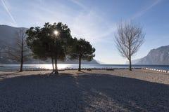 Beaux arbres nus le feuillage est au sol ils cachés la manière Photographie stock libre de droits