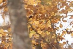 Beaux arbres nus le feuillage est au sol ils cachés la manière Image libre de droits