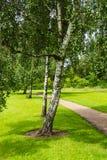 Beaux arbres près d'un sentier piéton en été photos stock