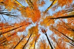 Beaux arbres réglés contre le ciel bleu Photos stock