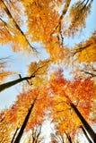 Beaux arbres réglés contre le ciel bleu Photo stock
