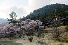 Beaux arbres Sakura de fleurs de cerisier fleurissant vibrant par une architecture japonaise traditionnelle sur le flanc de monta photos libres de droits