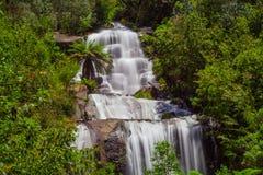 Beaux automnes plus faibles dans l'Australien indigène Forest Kiewa Valley, Victoria, Australie Image libre de droits