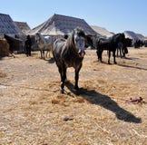 Beaux Berbers de cheval au Maroc 4 - JPEG d'image images stock
