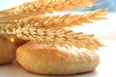 Beaux biscuits frais avec Photographie stock libre de droits