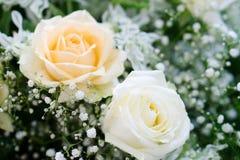 Beaux blanc et rose se sont levés Photo libre de droits