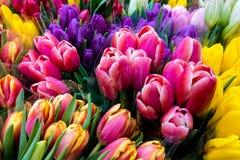 Beaux bouquets de ressort des fleurs, tulipes, fond image libre de droits