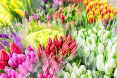 Beaux bouquets multicolores de fleur Diverses tulipes fraîches au fleuriste Vente en gros ou magasin détaillant de fleur Entrepôt Images libres de droits