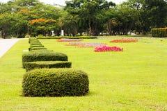 Beaux buissons luxuriants dans le jardin Photographie stock libre de droits