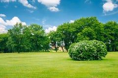 Beaux buissons luxuriants dans le jardin Horizontal ensoleillé d'été Images stock