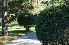 Beaux buissons ronds mêmes en parc photographie stock
