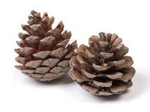 Beaux cônes de pin Image stock