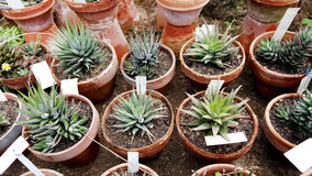 Beaux cactus dans Sofia Botanical Garden image stock