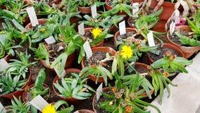 Beaux cactus dans Sofia Botanical Garden image libre de droits
