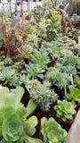 Beaux cactus dans Sofia Botanical Garden images libres de droits