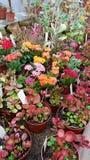 Beaux cactus de floraison dans Sofia Botanical Garden photo libre de droits