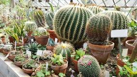 Beaux cactus verts dans Sofia Botanical Garden image libre de droits