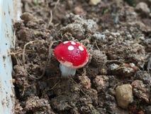 Beaux champignons images libres de droits
