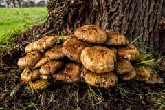 Beaux champignons décorant la nature Photos libres de droits