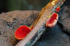 Beaux champignons décorant la nature Images stock