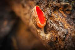 Beaux champignons décorant la nature Image stock