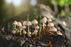 Beaux champignons dans la lumière de matin photos stock