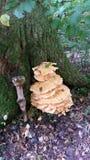 Beaux champignons de couche Images libres de droits