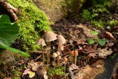 Beaux champignons de couche Image stock