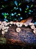 Beaux champignons de couche photos libres de droits