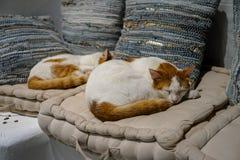 Beaux chats blancs et bruns de couleur dormant confortablement sur le coussin confortable de tissu blanc avec le fond d'oreillers photographie stock