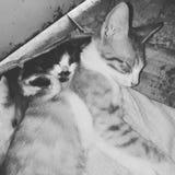 Beaux chats dormant dans le calme Images libres de droits