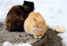 Beaux chats noirs et couleur rusée sur la rue en hiver Photo stock