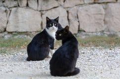 Beaux chats noirs se reposant sur la rue images libres de droits